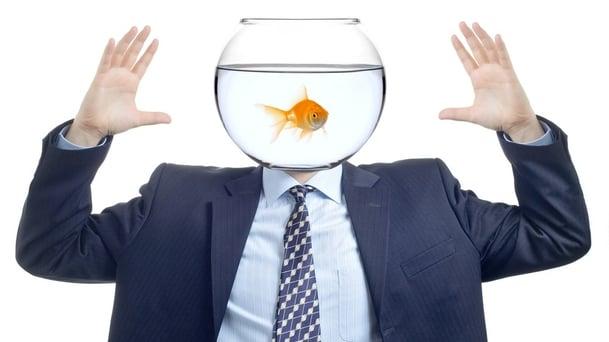 Hvordan skrive innhold for mennesker med «gullfisk hukommelse»?-800256-edited.jpg